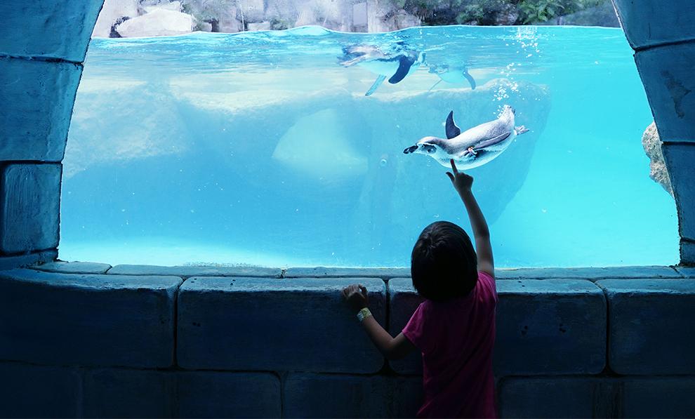 Best Camps Yet Aquarium